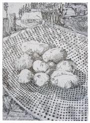 28-8-2015-aardappelen